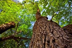 Pretty Little Thing (Jeffrey-Anthony) Tags: park trees nature delete10 canon delete9 delete5 delete2 photo pretty natural little delete6 walk delete7 thing delete8 delete3 delete delete4 save national valley yosemite