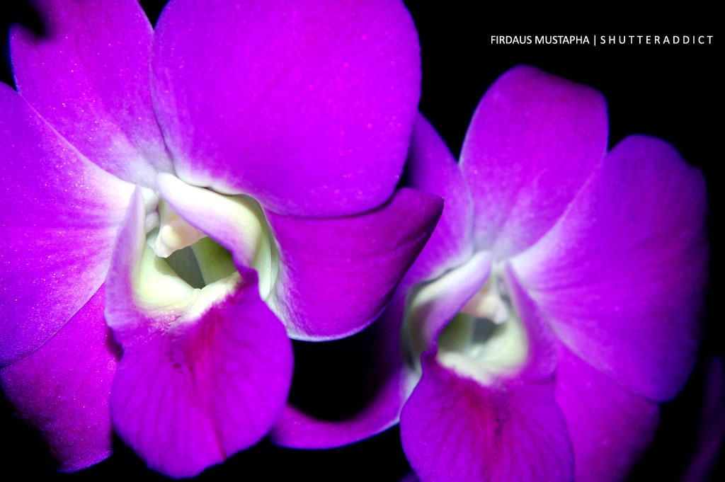 orkid-lah1