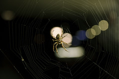 Trap (iM@n) Tags: nature netherlands insect spider nikon eindhoven trap عنکبوت d90 هلند nikond90 تله