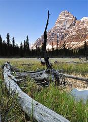 Chephren (Surreal McCoy (Alvin Brown)) Tags: mountain rockies banff rockymountains banffnationalpark