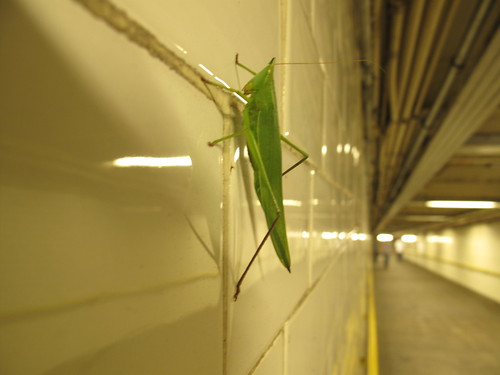 Subway insect
