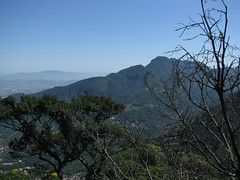 STD_8537.JPG (amadeujr) Tags: brazil nature rio brasil forest barradatijuca floresta ilha tracking trilhas tijuca pedradagavea gaveastone