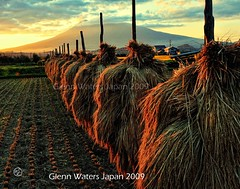 Rice Harvest.  (Hirosaki Japan).  Glenn Waters.  Over 8,000 visits to this photo.  Thank you. (Glenn Waters in Japan.) Tags: autumn sunset sky mountain fall field japan clouds rural japanese volcano nikon rice paddy dusk farm harvest explore lucky aomori sensational hirosaki  55 frontpage    iwaki        explored  d700 homersiliad  glennwaters travelsofhomerodyssey