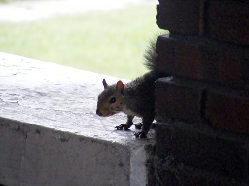 A furry visitor acnatta/Flickr