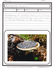 mushroom study 1