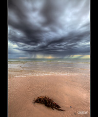 Storm at Henley - HDR (Dale Allman) Tags: ocean sky seascape storm seaweed nature water rain clouds canon sand surf waves seagull australia wideangle explore adelaide southaustralia hdr highdynamicrange 1740 henleybeach 3xp photomatix canon5dmkii 5dmkii