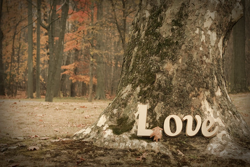 Love in the Forrest