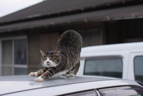 cat 1952
