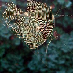 MORNING (329) (11楼朝北) Tags: morning cobweb day329 spidersilk 蛛网 329365 蛛丝