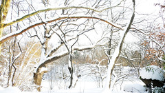 Central park in snow6