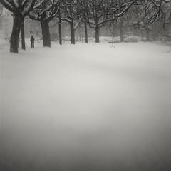 snow II (Guido Musch) Tags: trees blackandwhite snow tree netherlands square bomen nikon zwartwit sneeuw nederland boom groningen noorderplantsoen 50mm18 wilhelminakade 50mmf18 d300 vierkant seriese oranjesingel guidomusch