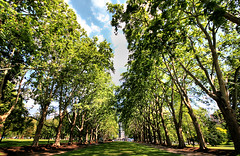 Carlton Gardens, Australia (` Toshio ') Tags: park trees sky building leaves gardens clouds forest spring downtown carlton branch oz perspective australian australia melbourne wideangle victoria trunk aussie tms southernhemisphere carltongardens toshio tellmeastory