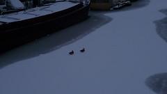 Winter in Amsterdam (Kirsteeen) Tags: winter white snow ice amsterdam duck ducks 2010 winterinamsterdam