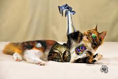 Cyborg Cat (R Joanne) Tags: cat adobephotoshop cyborg deviantart cs5 topazlabssoftware photobichochallenge
