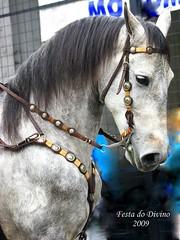 Stallion (tinica50) Tags: brazil horse sãopaulo cavalo stallion festadodivino mogidascruzes platinumphoto