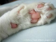 ミア(猫)の写真4