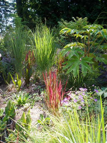 Illuminated grasses with Tetrapanax