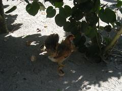 DSCN0835 (NextLab) Tags: philippines manila moca batanes