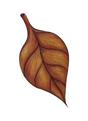 My Single Leaf