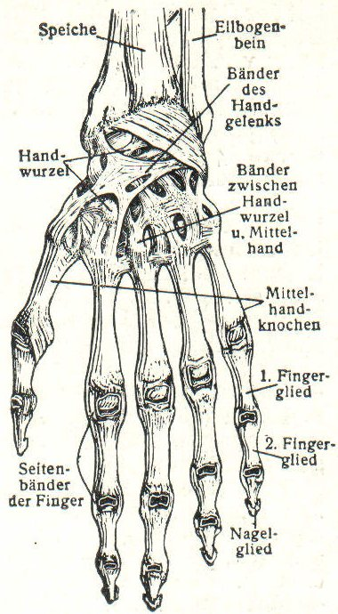 Science Art: Baender der Hand, Meyers Blitz-Lexikon, 1932 – The ...