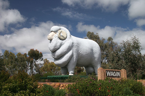 Big Ram at Wagin
