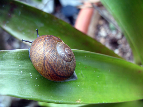 snail_3