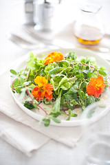 summer greens 11712 (skrockodile (www.cookbookcatchall.blogspot.com)) Tags: summer orange white green salad colorful lettuce greens simple purslane mesclun edibleflowers peashoot babygreen