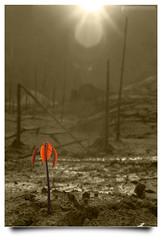Masih Ada Sinar (AnNamir c[_]) Tags: bw canon blackwhite flickr kitlens malaysia handheld ramadhan selectivecolor 500d kualakubu pertak syukur huluselangor annamir peretak sahabatsejati getokubicom muktasyaf digitalmukmin dampertak