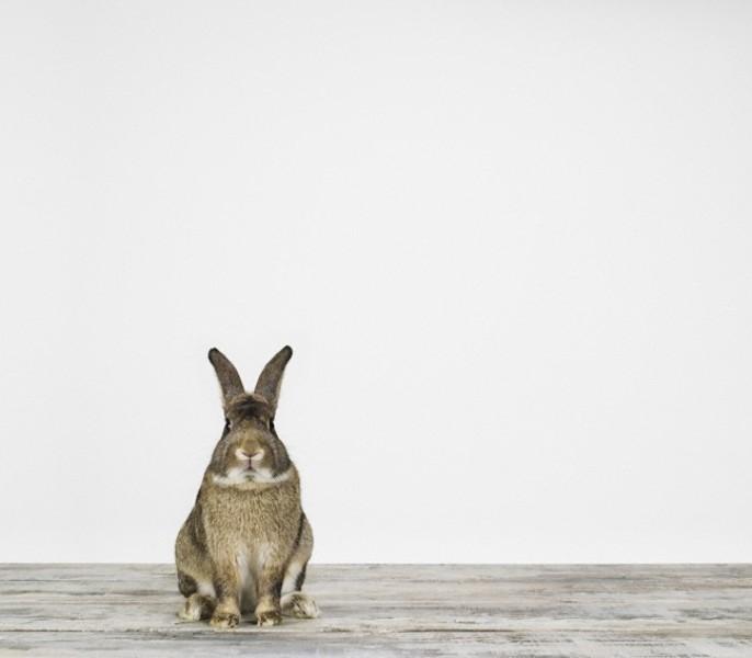 SharonMontrose bunny