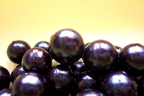 Jaboticabas - (Plinia trunciflora)