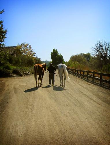 Juan leads the horses