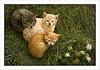 Tres (troky) Tags: lafotodelasemana gatos tres cruzadas ltytrx5 ltytr1 tff1 lfs092009