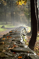morning walk letchworth (dukematthew2000) Tags: autumn trees fall wet leaves rock wall letchworth