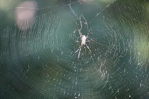クモの巣に見惚れました