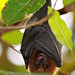 bat image, photo or clip art
