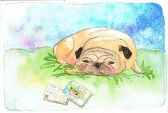 pug on postcard