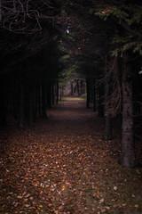 a leaf lined path (Haligonian Kimbits) Tags: trees color fall leaves path princeedwardisland 365 pei day293 brackleybeach canadanationalpark project3661