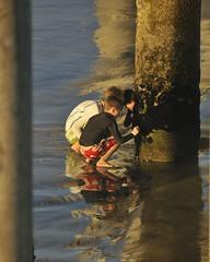 A Sense of Wonder (ScottS101) Tags: boy beach nature boys childhood animals children wonder pier sand science adventure learning pilings discovery allrightsreserved scottsansenbach