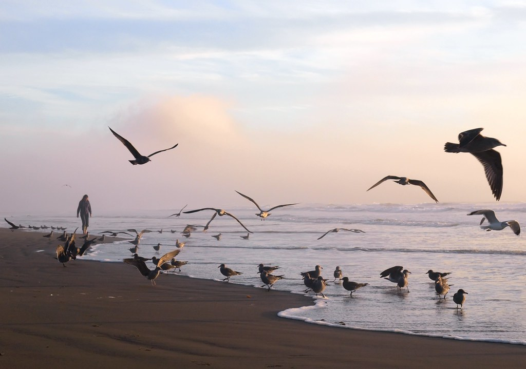 Gulls at Sunset on Morro Strand State Beach