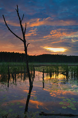 Mhlensee II, Nationalpark Mritz, Germany (Xindaan) Tags: morning light sky lake plant tree planta luz water forest sunrise plante germany landscape geotagged deutschland see licht nationalpark flora agua nikon scenery eau wasser europa europe lumire pflanze himmel bosque alemania oriente nikkor albero acqua landschaft wald sonnenaufgang allemagne arbre morgen 2009 baum luce fort germania manana matin bosco levant pianta foresta mattina mattino mecklenburgvorpommern mritz d300 22mm lumbre 1685 amanacer mecklenburgerseenplatte nationalparkmritz muritz kargow 1685mm nikkorafs1685mmf3556gvr afs1685mmf3556gvr levata afs1685mm magicunicornverybest rehhof geo:lat=5345103920 geo:lon=1282105614