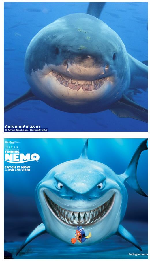 Buscando a Nemo tiburón