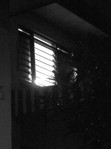 IMG_4370  Neighbour's Window ,邻家窗子