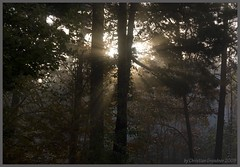 Fall Morning (grundi1) Tags: wood fall fog sunrise austria nebel sony herbst 300 lower alpha wald sonnenaufgang niedersterreich hollenthon