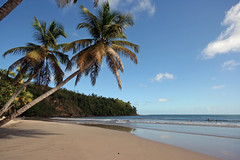 La Sagesse, Grenada (Tom Willett) Tags: beach paradise palmtrees grenada caribbean westindies lasagesse