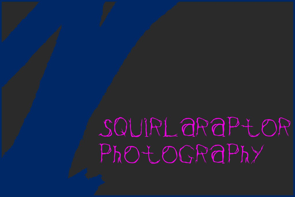 Squirlaraptor Photography