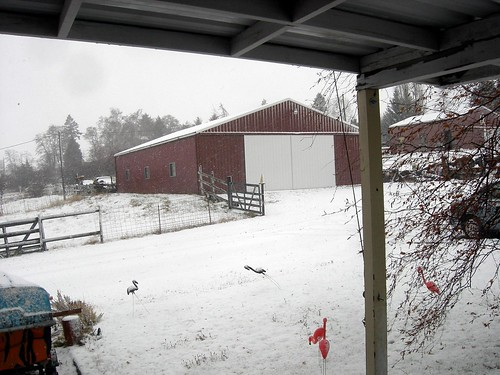 11-22-09 snow