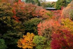 Tokufuji, Kyoto