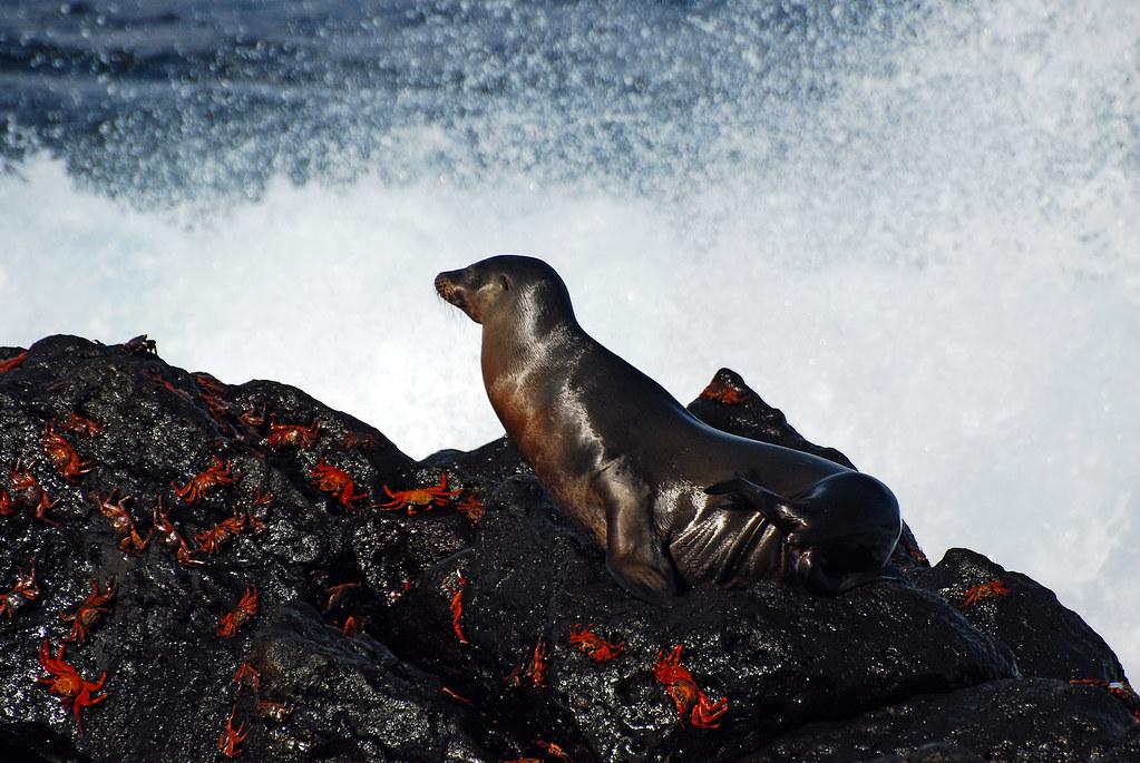 Galapagos Islands-150
