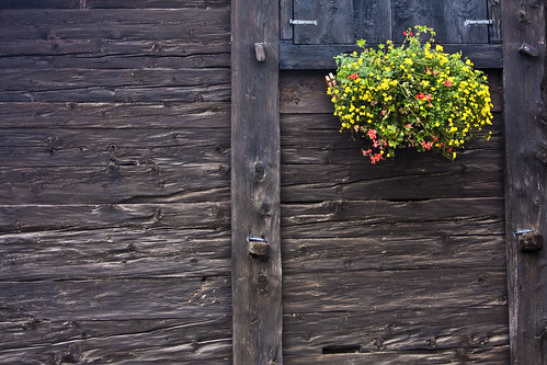 Wood & Flowers