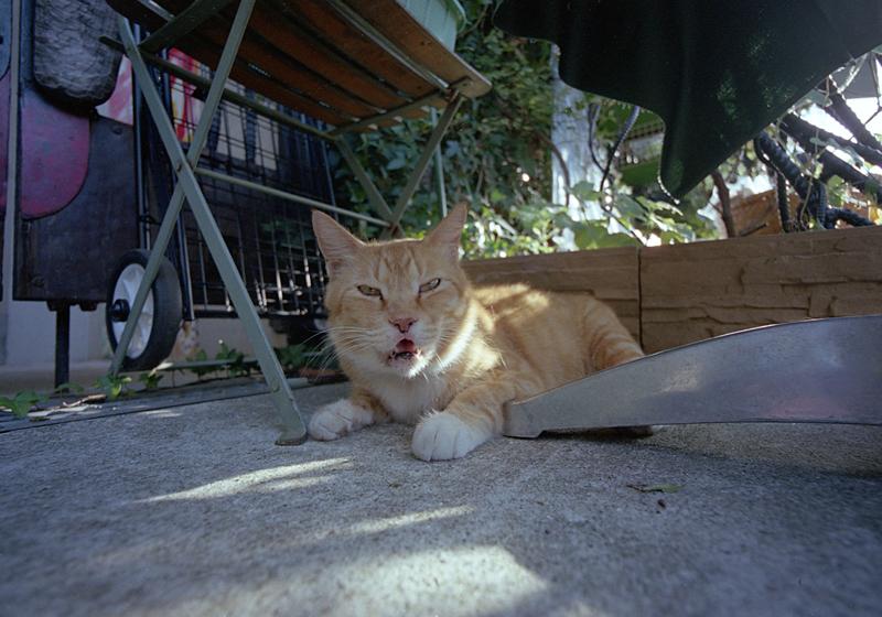 テーブル下の猫
